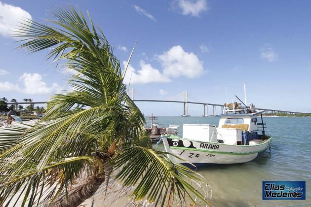 O coqueiro brotou em plena areia salgada trazendo beleza ainda maior a praia da Redinha.