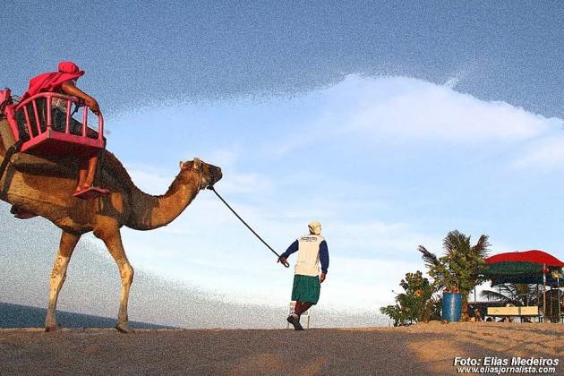 Dromedunas divulga tarifa para 2016 dos passeios de dromedários nas dunas de Jenipabu.